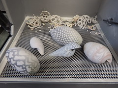 3D printed seashells (fdecomite) Tags: math geometry meinhardt klinger 3d print impression sea shell coquillage