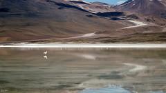 Bolivya (Dünya Turu Günlükleri) Tags: bolivya bolivia laguna göl flamingo volcano trip travel tour world dünya latin güney amerika