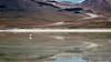 Bolivya (Son Yer Değiştirici) Tags: bolivya bolivia laguna göl flamingo volcano trip travel tour world dünya latin güney amerika
