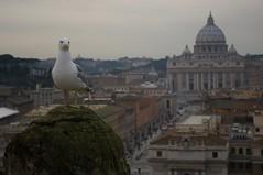 Rome 2010 567