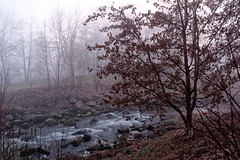 (user1385679) Tags: lustnau tübingen tuebingen germany deutschland landscape fog nature nebel
