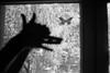 shadow play (Bianca Kokolores) Tags: berlin monochrome blackandwhite film minox shadows figures shadowplay nature butterfly