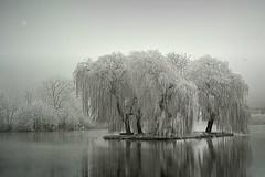 Paysage Givré ( photopade (Nikonist)) Tags: paysage givre nikon nikond300 nature picardie somme imac affinityphoto arbres