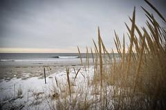 In the distance (devinchaganis) Tags: landscape sanddunes dunes seagrass snow winter nikon nikonphotography ocean beach wave