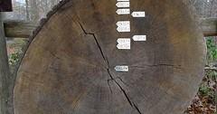 """Die Baumscheibe. Die Baumscheiben. Die Ringe auf der Baumscheibe sind: Der Jahresring. Die Jahresringe. • <a style=""""font-size:0.8em;"""" href=""""http://www.flickr.com/photos/42554185@N00/32128889430/"""" target=""""_blank"""">View on Flickr</a>"""