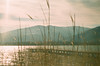 09540020 (tarteltarantel) Tags: nature tree mountain green blue lake tent camp sky cloud analoguephotography analogue analog fotoğraf türkiye kocaeli izmit dağ doğa