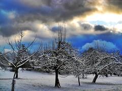 A light in the dark (almresi1) Tags: snow tree welzheim sky clouds lights