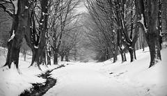 Avenue (cliveg004) Tags: avenue greenvalley malvern malvernhills greatmalvern snow trees worcestershire winter stream