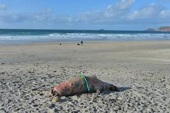 England 323 Sennen cove (Pixelkids) Tags: sennencove cornwall cornishcoast uk england beacg strand meer