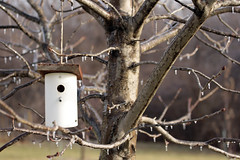 Home Sweet Home 01132017 (Orange Barn) Tags: ice icestorm winter barebranches baretrees birdhouse cold homesweethome