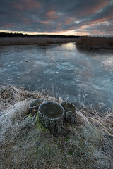 Triple stump (- David Olsson -) Tags: sweden karlstad kroppkärrssjön kroppkärr lake ice winter frozen freezing cold early morning dawn sunrise stumps frost reed landscape seascape nature oudoor cloudy niko d800 1635 1635mm 1635vr vr fx davidolsson 2017 januari january leefilters 06hard gnd grad