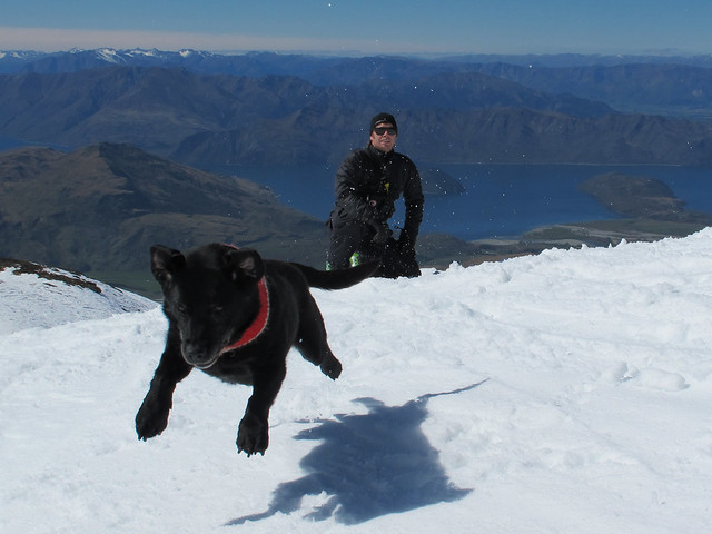 Milly's last day as an Avalanche Dog with handler Brendan (aka Doons) Kearns - Treble Cone, Wanaka NZ (September 28 2014)