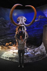 Those woolly mammoths were HUGE!