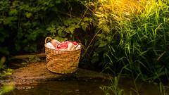 IMG_6156 (Amber Ranay Photography) Tags: baby basket sleep halo