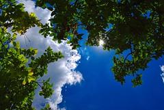 Nebo (Sareni) Tags: light summer sky sun colour nature colors june shadows branches serbia sm 72 cluds dunja leto vojvodina twop srbija nebo banat 2015 grane boje svetlost oblaci sunce senke alibunar juznibanat sareni savemuncana
