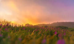 Its primary raw materials are light and time. (Photography Revamp) Tags: light sunset field landscape hdr hdri