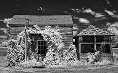 encroaching - infrared (eDDie_TK) Tags: blackandwhite bw rural ir colorado weld co infrared rurallife ruralliving weldcounty weldcountyco
