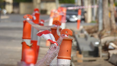 Zigzag Safety Line (Theen ...) Tags: street red orange white sunshine lumix neon suburban line safety trench adelaide breeze zigzag fluttering drainage theen trafficbollards