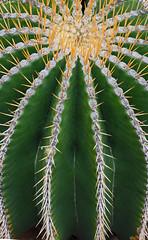 Cactus Lanzarote (Lark Ascending) Tags: cactus cacti lanzarote spines green pattern ridges circles barrel canaryislands succulent spain prick