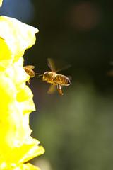 IMG_4863.jpg (Ivo Konopac AE) Tags: flickr home kvety plant rataje rostlina zluta