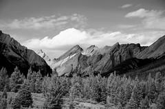 High Mountain Meadow DSL4524 (iloleo) Tags: landscape bw alberta mountains canada vista scenic nature banffnationalpark trees nikond7000