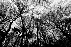surrounded by mysterious beings (Fearghàl Nessbank) Tags: nikon d5100 tokina trees bw monochrome mono blackwhite