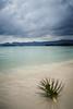 A Taste Of Paradise (Andy Bracey -) Tags: bracey andybracey andybraceyphotography sea atasteofparadise palm coconut longexposure littlestopper leefilters stormy storm rainyseason monsoon thailand kohsamui chewangbeach beach chewang asia asian nikon d3s