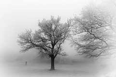 Winter fog (RobertFenyo) Tags: winter fog tree trees landscape eos 6d blackwhite