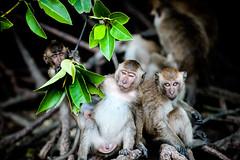 monkeys-1020