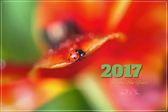 Happy New Year!! (Supervliegzus) Tags: happynewyear redandgreen 2017 macro nikon d7100 ladybug nature tulip flower