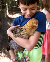 Chicken Coop, August 2015. (Keighlea_Martin) Tags: indiana summer 2015 august outside home family chickens animals poultry