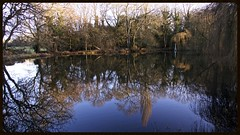 Winter reflections (Englepip) Tags: odihamcommon water pond lake reflections folly trees landscape countryside hampshire outdoor