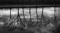 The row (robvanderwaal) Tags: netherlands winter mirror water reflection boom nederland trees bomen spiegeling rvdwaal reflectie brielle voorneputten robvanderwaalphotographycom 2017 blackwhite monochrome zwartwit tree contrast mono blackandwhite zw voorne bw spiegel