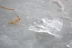 Seebad Mörbisch (anuwintschalek) Tags: nikond7000 d7k 18140vr austria burgenland neusiedlersee neusiedl järv jää lake see eis ice talv winter january 2017 uisutamas skating schischulaufen eislaufen mörbisch seebadmörbisch mörbischamsee jäälind icebird