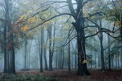 Forest blues (JonoHub) Tags: forest woods trees fog cold blue winter ashridge moody nationaltrust england