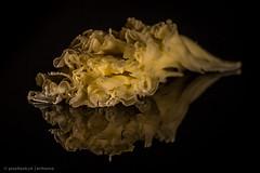 Monkhead | LowCheese (krihama) Tags: bokeh cheese käse lowkey macromondays saycheese