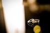 IMG_8674 (ksv2046) Tags: wedding bw ceremony wed 흑백사진 흑백 아버지 반지 피아노 기억 신랑 예물 프로포즈 축가 웨딩드레스 화이트 신랑신부 축복 설레임 마음가짐 웨딩스튜디오 스냅촬영 본식스냅 웨딩슈즈 스튜디오코이 버진로드 웨딩밴드