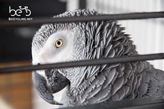 Vero's parrot (dnl.sneike) Tags: albums tajikistan dushanbe tajik districtsofrepublicansubordination districtsofrepublicansubordin