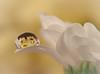 Fragile... (jo.pinkroses) Tags: macro petals flowers refraction droplet water xs1 fuji