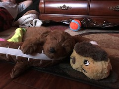 Gabby and Chewy II's sweet Milo!