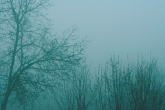 Lost in mist (Giulia Gasparoni) Tags: fog mist nebbia nature weather winter season seasonal tree trees plants decadence silhouette silhouettes macro curtain vintage indie retro pale grunge aesthetic photography