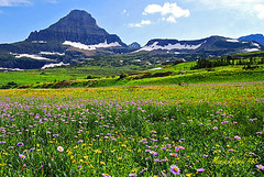 THE COLORS of WILD FLOWERS at GLACIER PARK (mariagrandi985) Tags: landscape mountains sky bluesky skyandclouds wildflowers colors blue green greenbeautyforlife yellow pink magenta outdoor outinthegreen summer glaciernationalparkmontanausa summeringlacierpark beautifullandscape colorsinnature nature nationalparksusa flowers daisyflowers mariagrandi985 hotcolors
