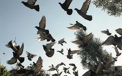 Winter Portra160 2017204 (dannonseo) Tags: pigeons skyrats ratsofthesky 35mmfilm 35mm nikonfe 50mm birds lookup kodak portra160