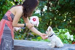 hand hand (ceci cheung) Tags: yorkie yorkshireterrier tanji me