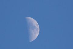 polverizzata dal vento gelido, sembra di ghiaccio  (explored) (Carla@) Tags: liguria italia europa luna moon coth thesunshinegroup alittlebeauty mfcc canon supershot explorenaturethewildnature fabuleuse