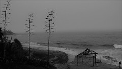 Trinity's Storm (Rand Luv'n Life) Tags: odc our daily challenge la jolla california wind n sea beach winter storm ocean waves surf hut christmas wreath seashore wave monochrome woman outdoor