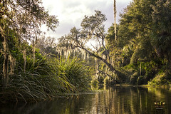 Kayaking the Peace River in Florida (SteveFrazierPhotography.com) Tags: peaceriver river tree limbs spanishmoss water sunlight brush tropical shoreline shore surface reflections ripples florida charlottecounty fl december2016 stevefrazierphotography palmtrees liliepads waterlily aqua alligator rural wilderness outdoor beautiful rugged southwestern mangroveswamps tidalwetlands kayak kayaking canoe canoeing boat landscape waterscape