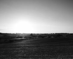 Dawn (BrianMills) Tags: blackwhite contrast fields dawn sunlight fuji fujifilm trees field bw graduated nd monochrome wide 16mm outdoor sky tones
