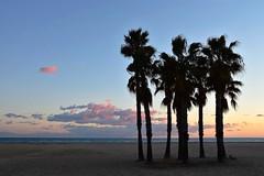Welcome to the Paradise . (Alex Nebot) Tags: playa beach platja nube nuvol palmera arena sand sunset tramonto baixpenedes penedes penedesmaritim nikon d7200 tamron tarragona tgn catalonia catalunya colors colores mediterrani mediterranean 18200