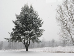 snowed (1) (Ange 29) Tags: snow trees olympus omd em1 mkii 1435mm zd king township canada
